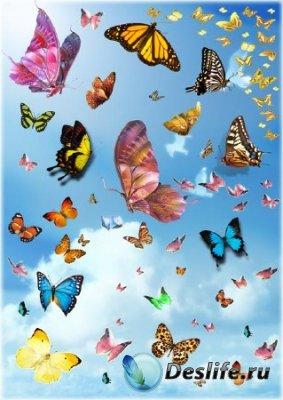 Клипарт с бабочками