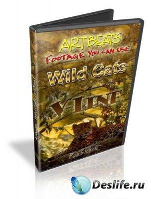 Футажи - Дикие кошки (Wild Cats)