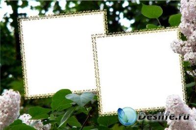 Рамка для фотошопа – Сирень