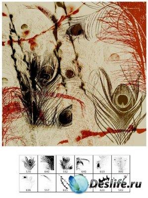 Кисти для фотошопа - Перья павлина