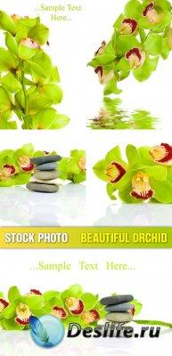 Stock photo - Beautiful orchid / Орхидеи