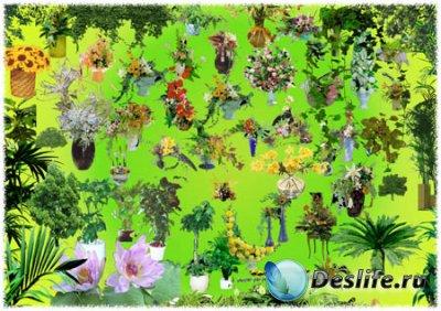 Клипарт для фотошопа - Растения и Цветы