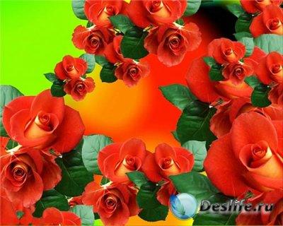 Прекрасные футажи для видеомонтажа - Розы