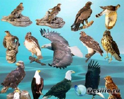 PSD клипарт для фотошопа «Птицы»