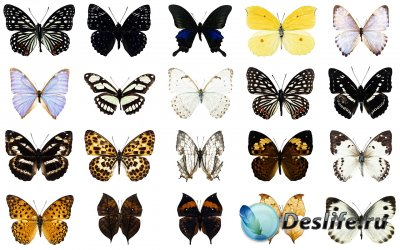 Клипарт для фотошопа - Бабочки на прозрачном фоне