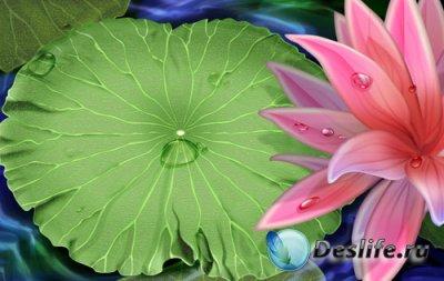 Красивый многослойный PSD исходник для фотошопа – Лилии в воде