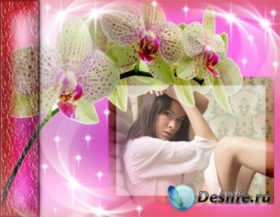 Рамка для фотошопа с веткой орхидеи