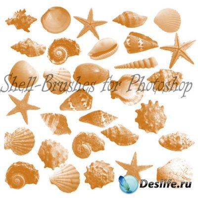 Shell Photoshop Brushes - Кисти для Фотошопа