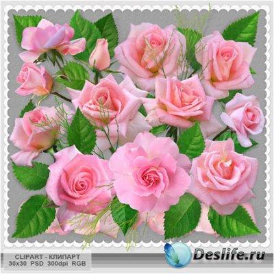 Цветочный клипарт - Розовые розы