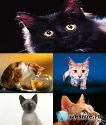 Обои для рабочего стола - Кошки / Cats