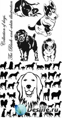Collection of dogs. The Black-and-white illustration