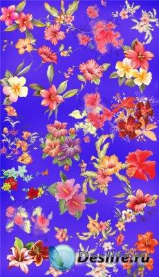 Цветочный клипарт - Гибискусы
