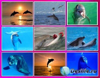 Обои для рабочего стола - Дельфины