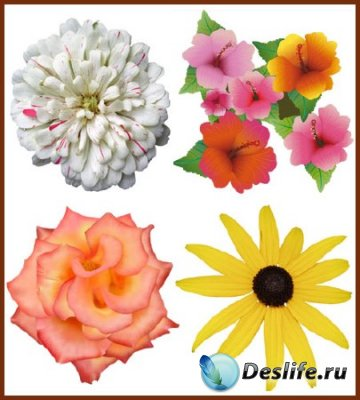 Цветы на прозрачном фоне - Клипарт