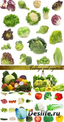 Stock Photo: Cabbage and vegetable