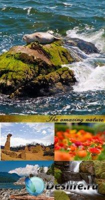 Stock Photo: The amazing nature
