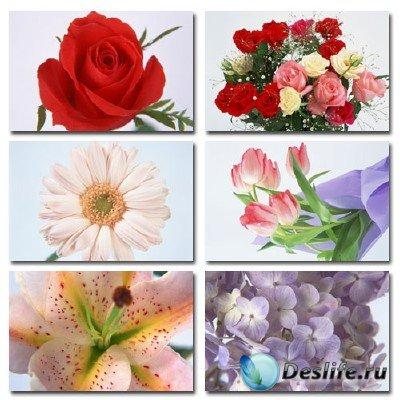 Клипарт на тему цветов - Flower Power