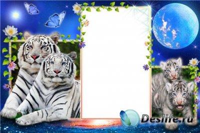 Рамка для фотошопа – Тигры