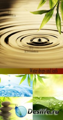 Stock Photo: Water drops and leafs