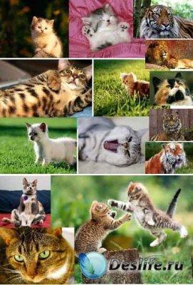 Забавные и грозные представители кошачьих - Обои для рабочего стола