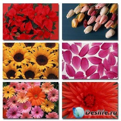 Клипарт на тему цветов - Flower Power 2