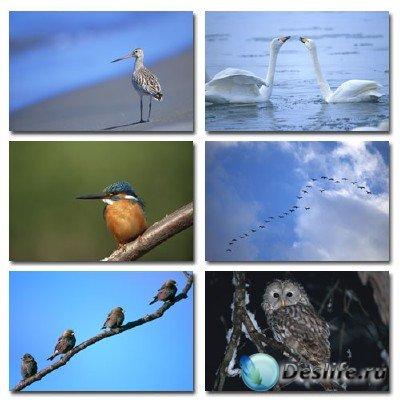 Набор профессионального клипарта Native Birds на тему