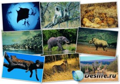 Обои для рабочего стола - Животные (Animals Wallpapers)