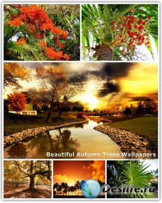 Обои для рабочего стола - 30 Beautiful Autumn Trees Wallpapers