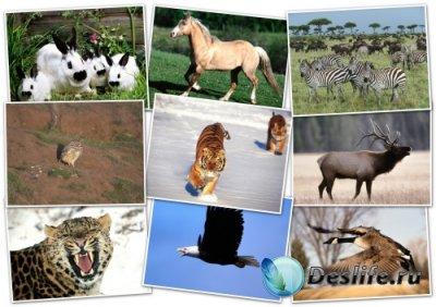 Обои для рабочего стола - Животные (Animals Wallpapers) (Pack 2)