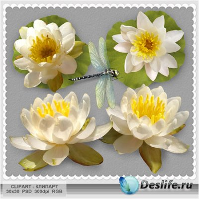 Клипарты для фотошопа - Белые лилии