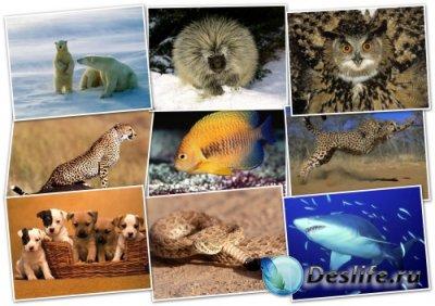 Обои для рабочего стола - Животные (Animals Wallpapers) (Pack 3)