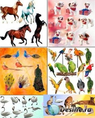Клипарт - Животные и птицы