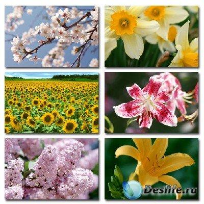 Набор профессионального клипарта Flower Power 3 на тему