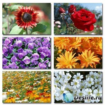 Набор профессионального клипарта Flower Power 4 на тему