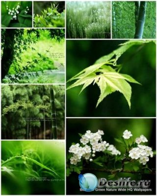 65 Beautiful Green Nature Wide (HQ Wallpapers) - Обои для рабочего стола