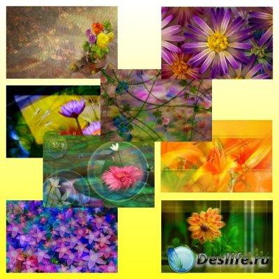 Фоны для фотошопа - Радужные цветы