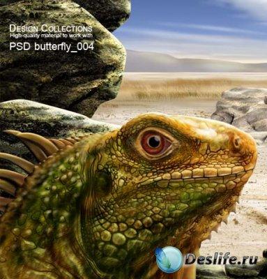 PSD исходник для фотошопа - Butterfly 4