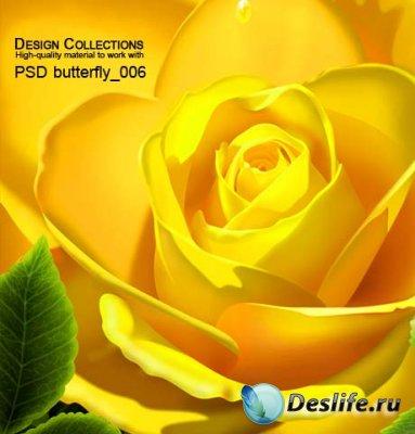 PSD исходник для фотошопа - Butterfly 6