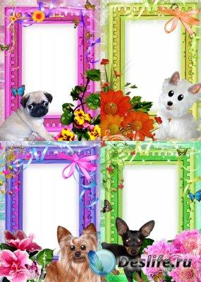 4 рамки для Photoshop – С забавными собачками
