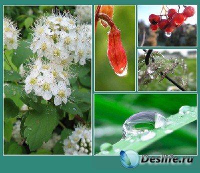 Красоты природы (подборка №8 - Природа в капельках росы)