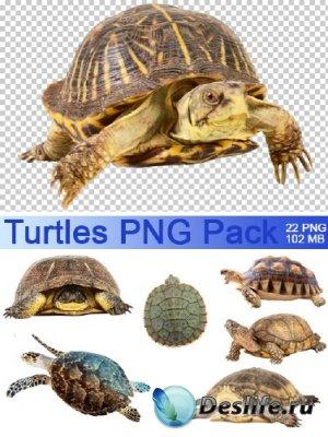 Клипарт - Морские и сухопутные черепахи (Turtles PNG Pack)