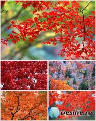 Фоны для фотошопа - Осенний коллаж