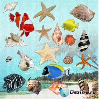 Клипарт - Ракушки, морские звёзды и рыбки