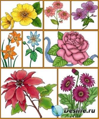Клипарт - Цветы PSD