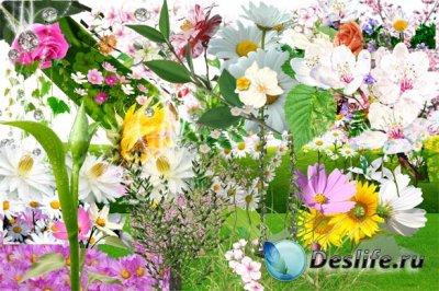 Клипарт для фото коллажей - Цветы, растения