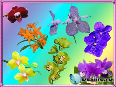 Клипарт Орхидеи - 7 цветов радуги