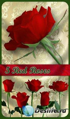 Клипарт - Пять красных роз (5 Red Roses)