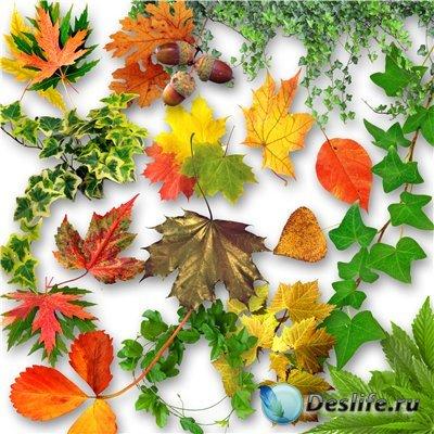 Клипарт - листья / Klipart - leaves