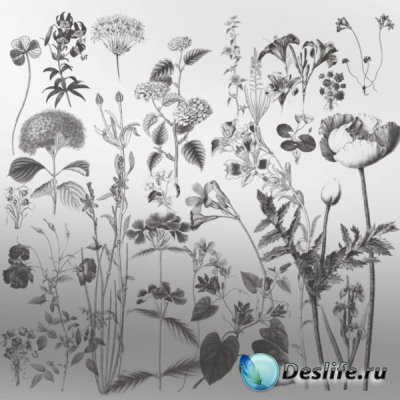 Коллекция кистей - Цветы