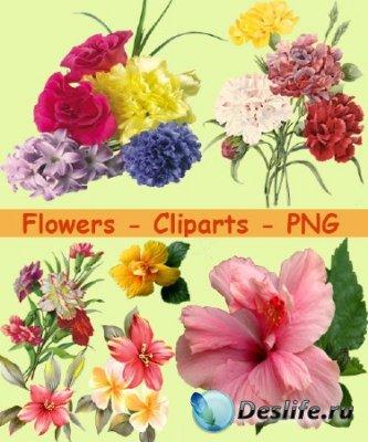 Клипарт - Цветы для украшения